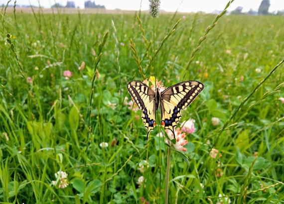 hof-zum-walde-biodiversiteit-09